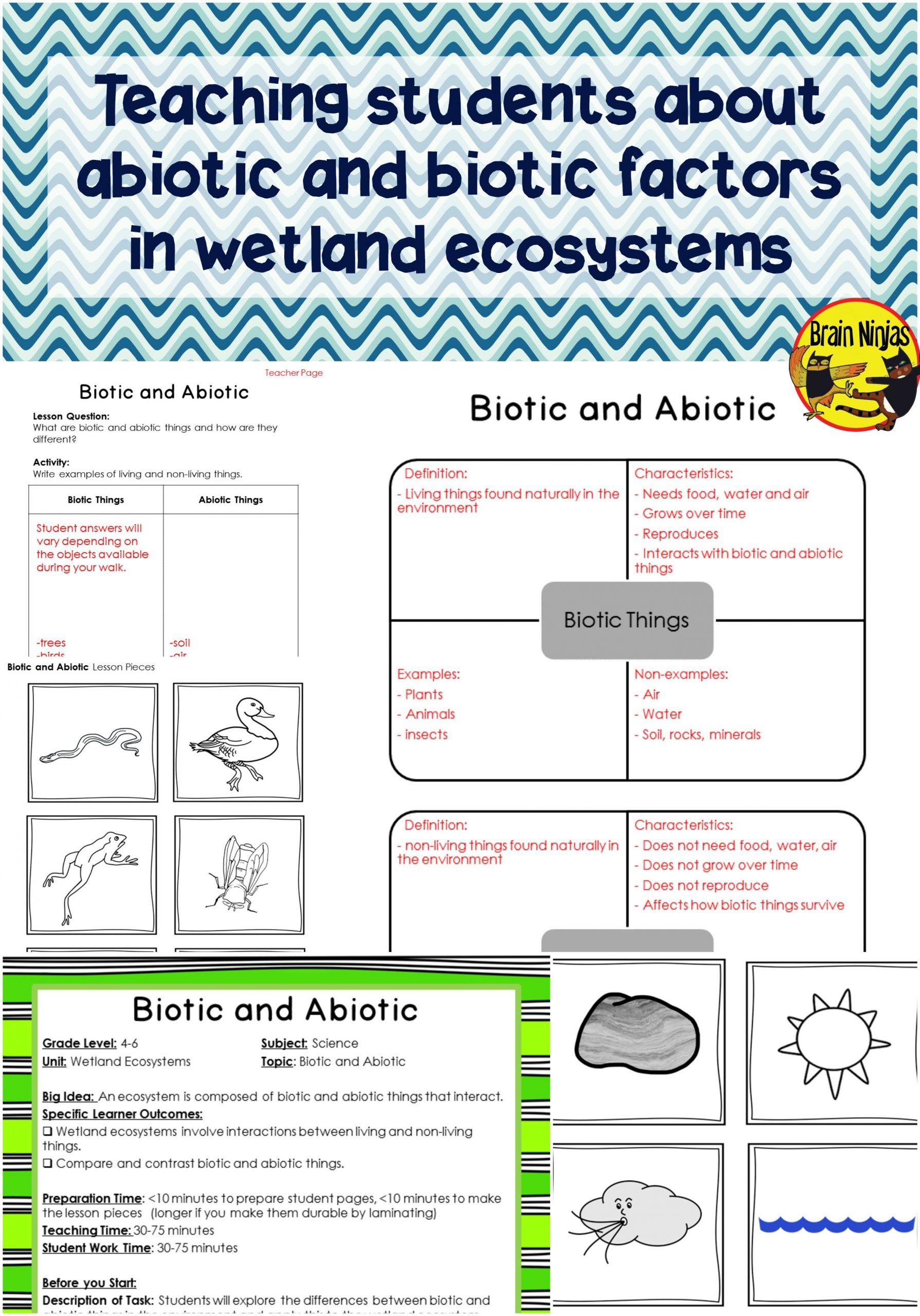 Abiotic Vs Biotic Factors Worksheet Answers Wetlands Biotic and Abiotic Interactions