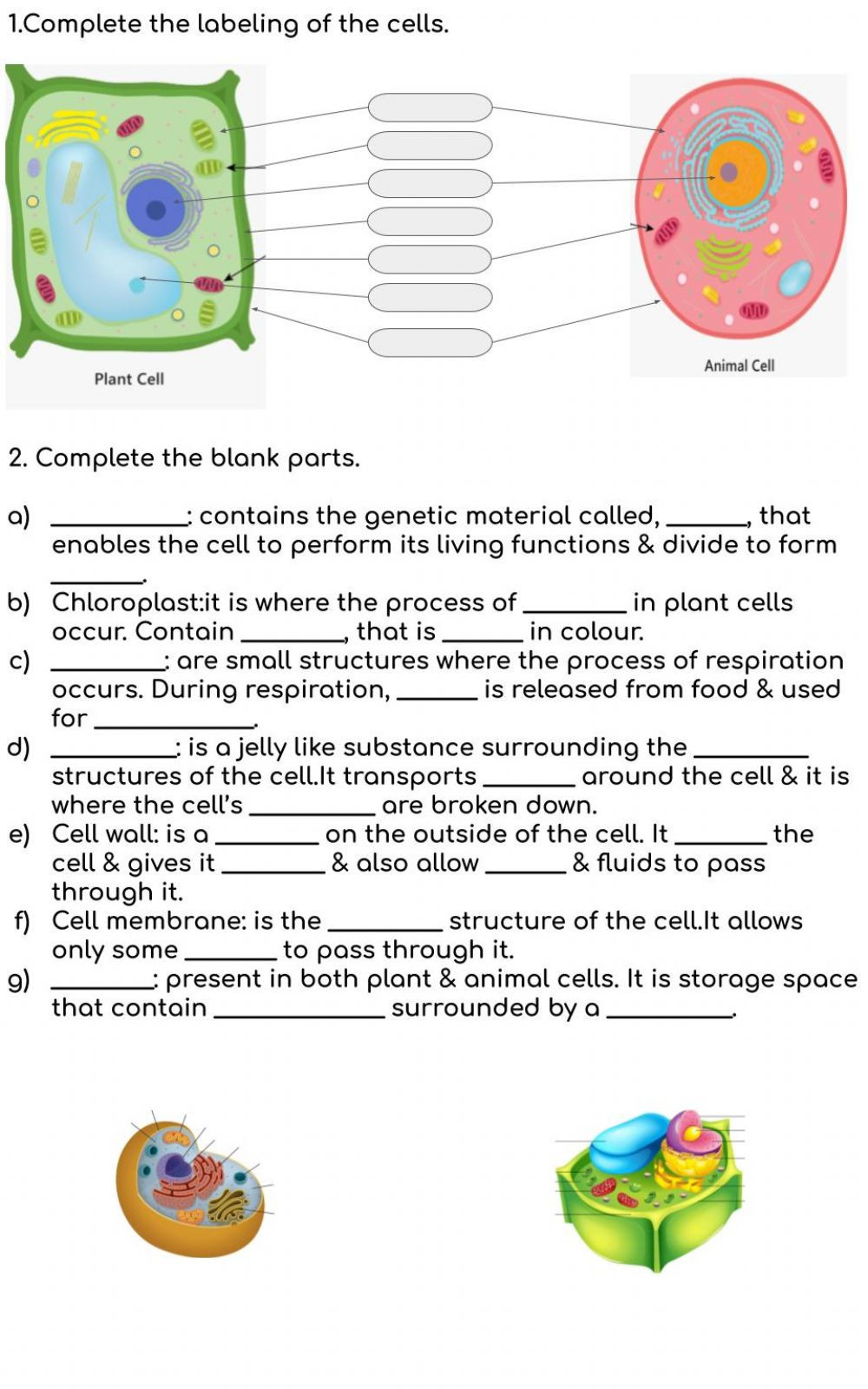 Animal and Plant Cells Worksheet Animal & Plant Cells Interactive Worksheet
