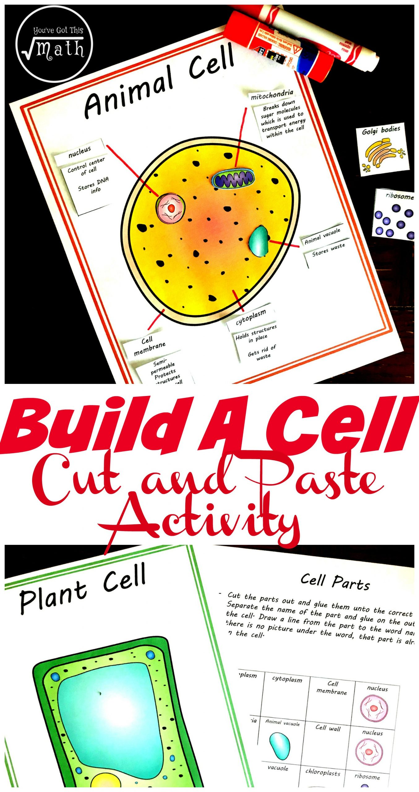 Animal and Plant Cells Worksheet Free Cut and Paste Animal and Plant Cell Worksheet