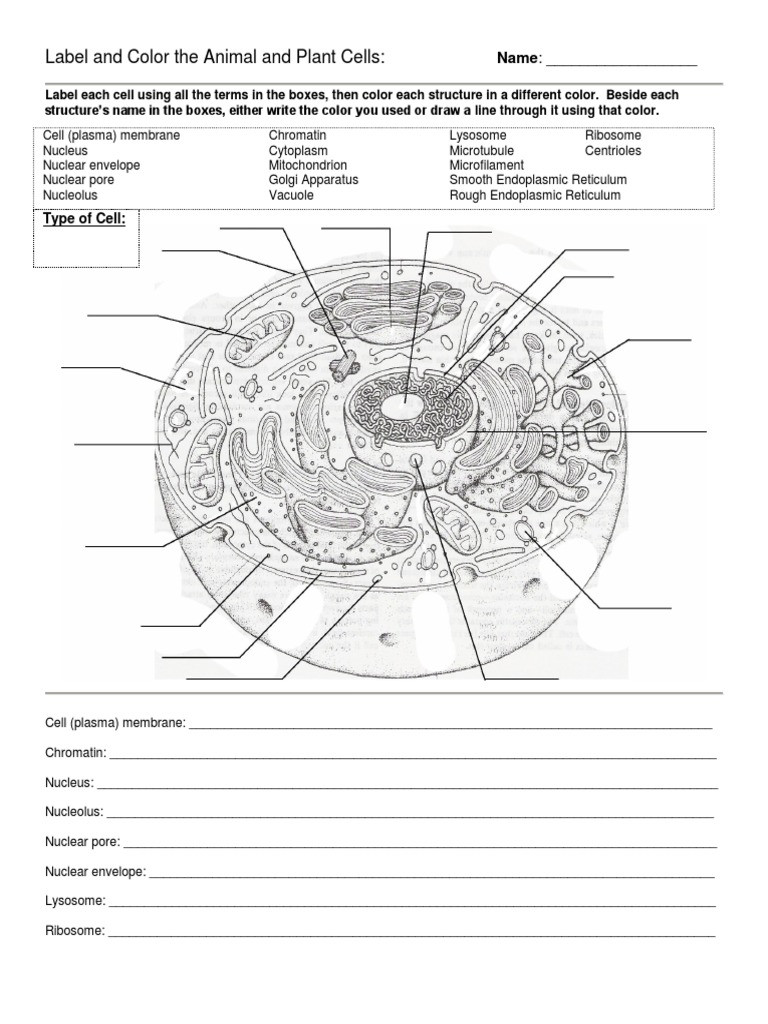 Animal and Plant Cells Worksheet Label and Color the Animal and Plant Cells