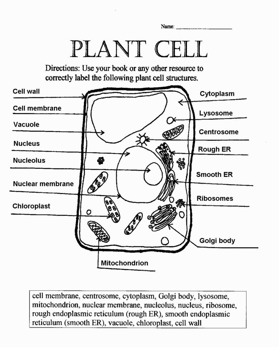 Animal and Plant Cells Worksheet Plant Cell Coloring Diagram