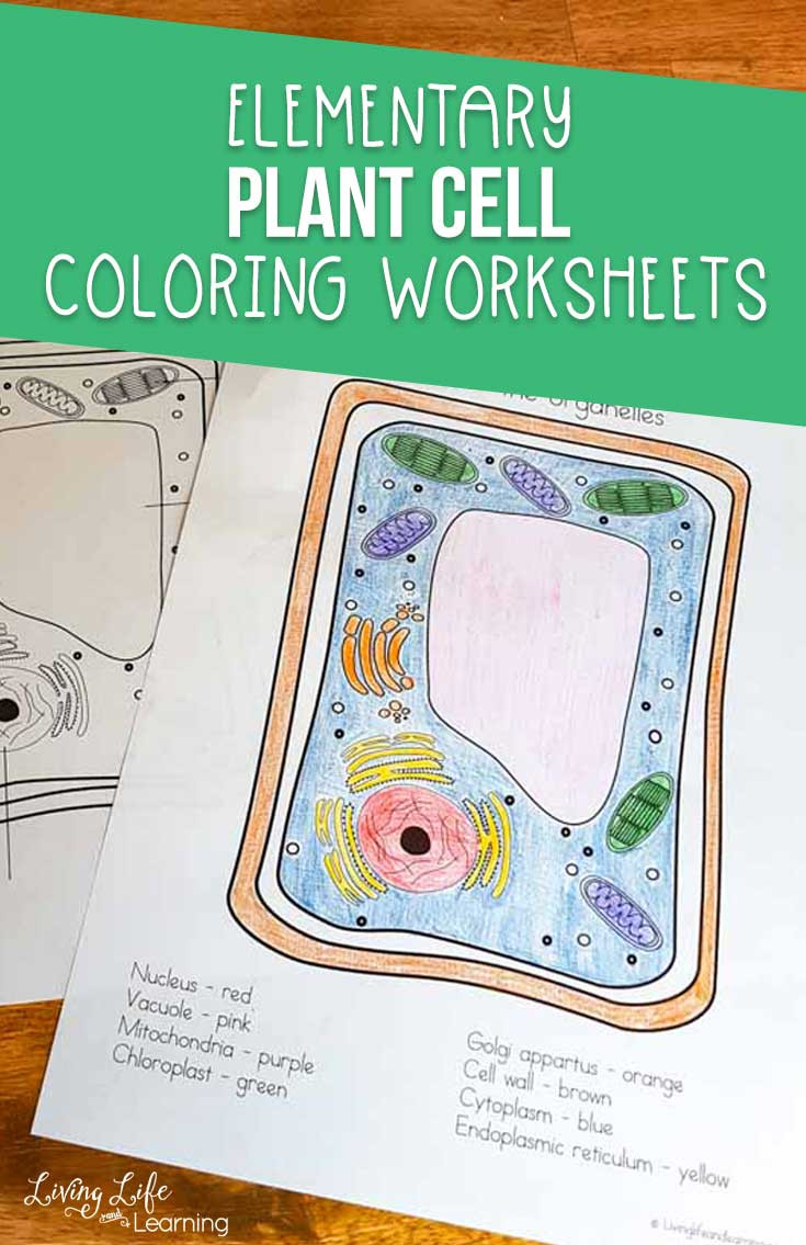 Animal Cells Coloring Worksheet Plant Cell Coloring Worksheet
