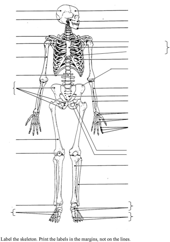 Appendicular Skeleton Worksheet Answers 32 Label the Skeleton Worksheet Answers Labels Database 2020