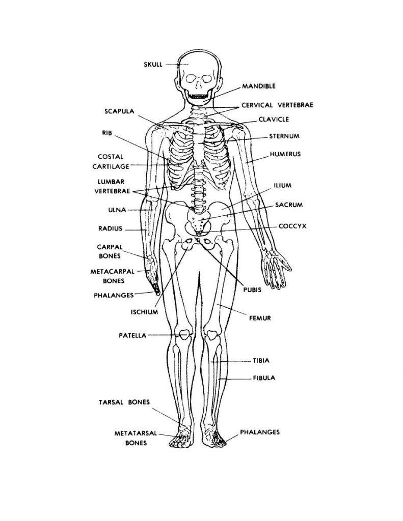 Appendicular Skeleton Worksheet Answers Anatomy Quizzes Bones Bones Quiz Anatomy Human Anatomy