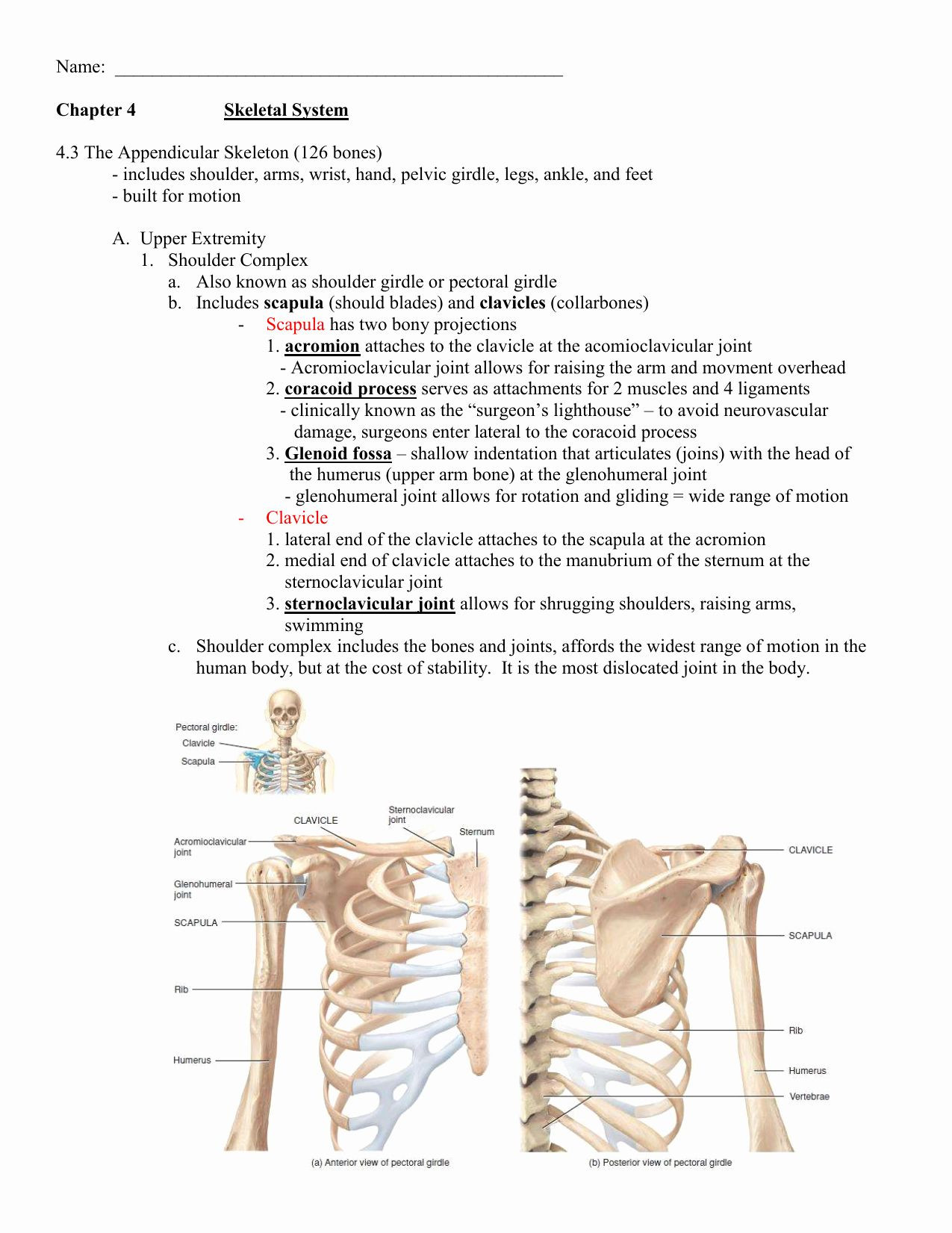 Appendicular Skeleton Worksheet Answers Appendicular Skeleton Worksheet Answers Unique Worksheet