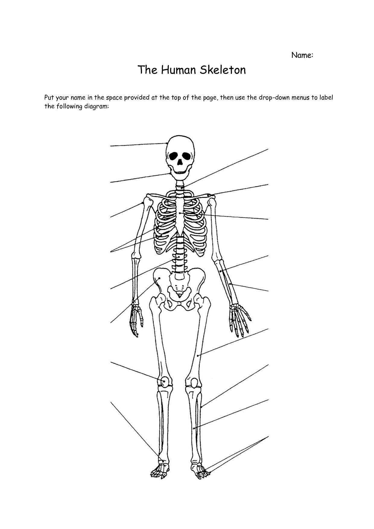 Appendicular Skeleton Worksheet Answers Pin On Printable Blank Worksheet Template