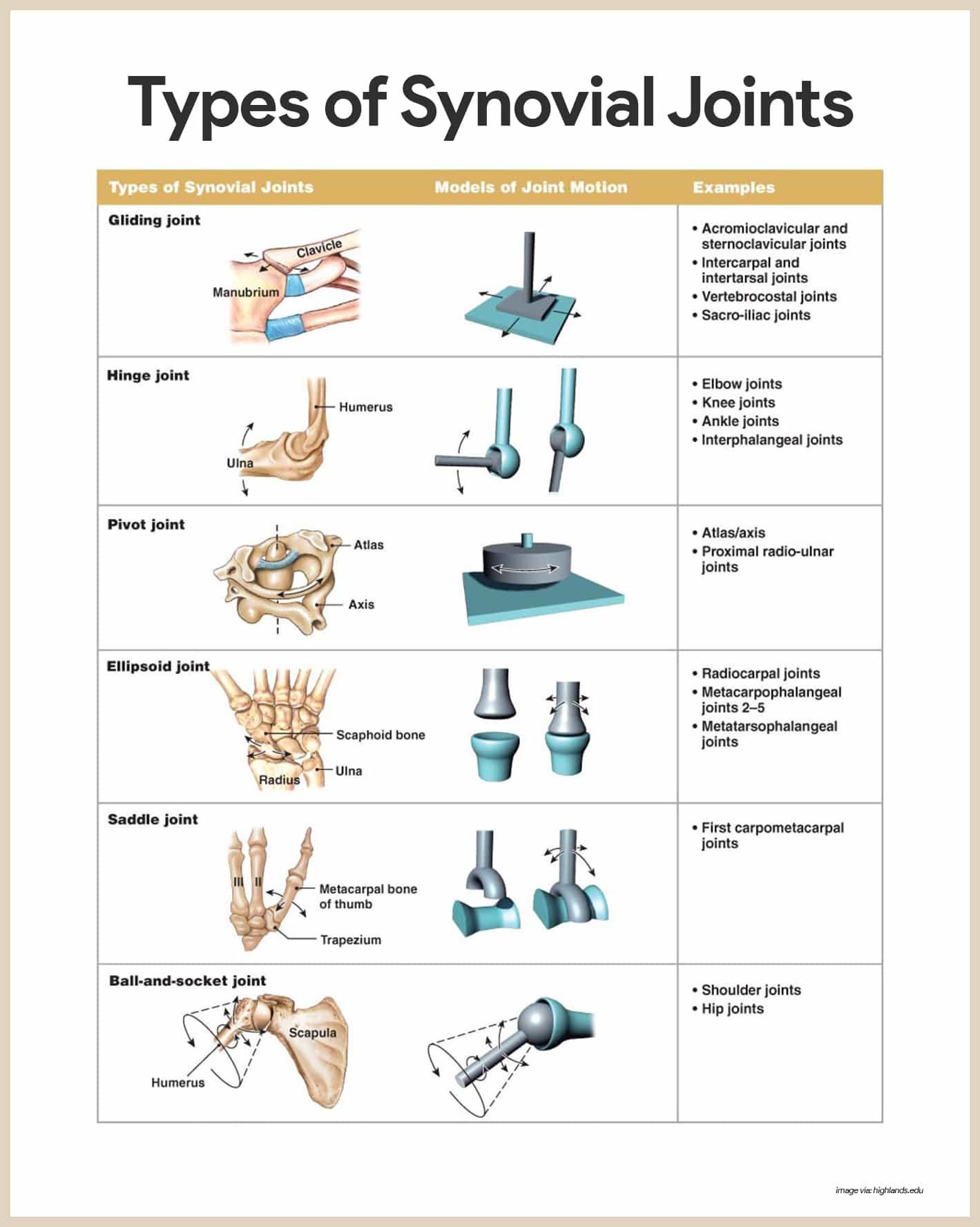 Appendicular Skeleton Worksheet Answers Skeletal System Anatomy and Physiology Nurseslabs
