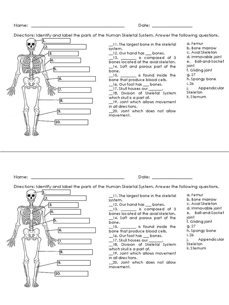 Appendicular Skeleton Worksheet Answers Skeletal System Quiz Skeleton