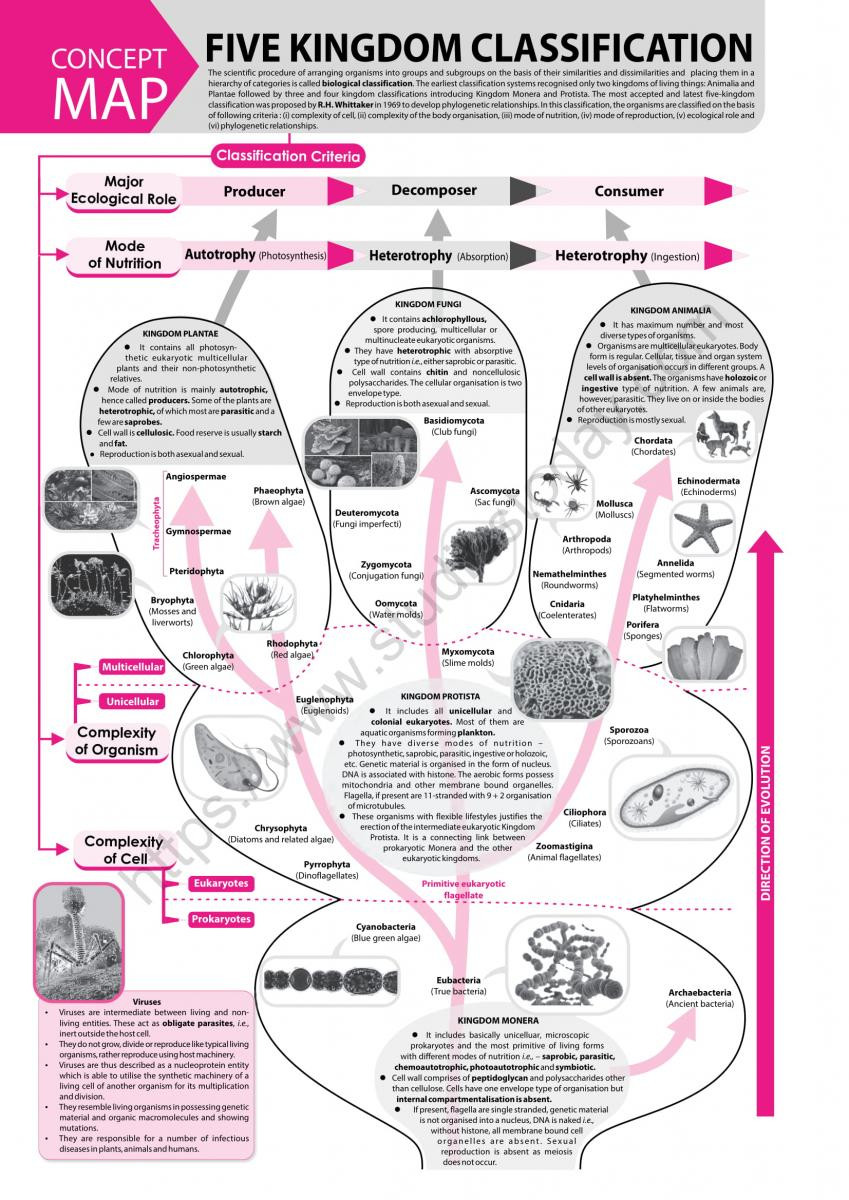 Biological Classification Worksheet Answers Neet Biology Five Kingdom Classification Concept Map