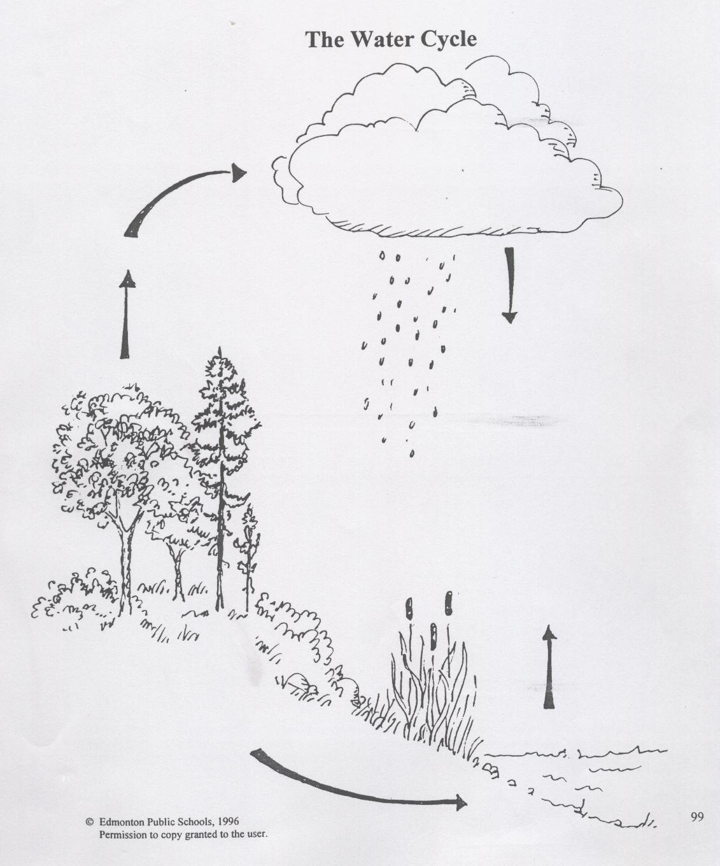 Carbon Cycle Diagram Worksheet Science