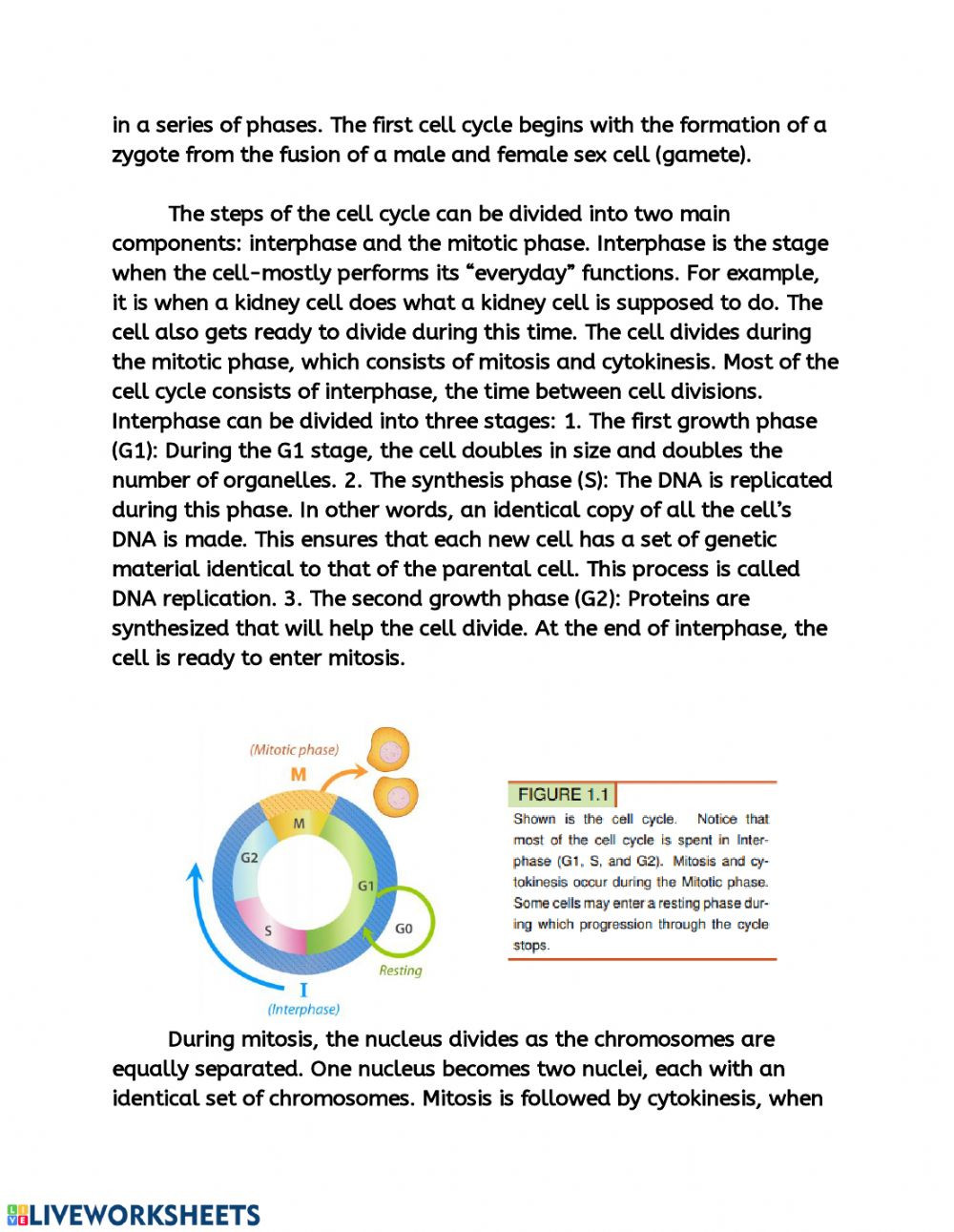 Cell Cycle and Mitosis Worksheet Cell Cycle Friday assignment Interactive Worksheet
