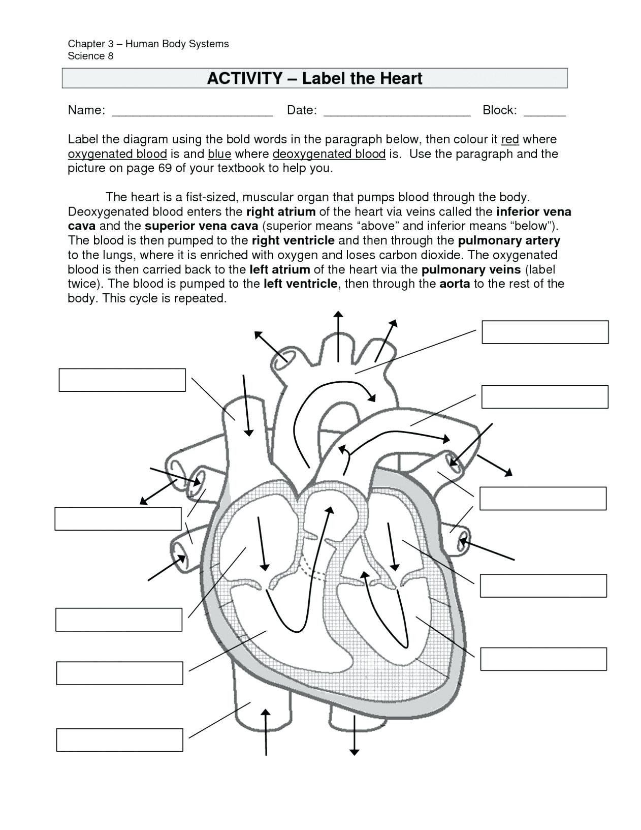 Cell Cycle and Mitosis Worksheet the Cell Cycle Coloring Worksheet Answer Key Inspirational