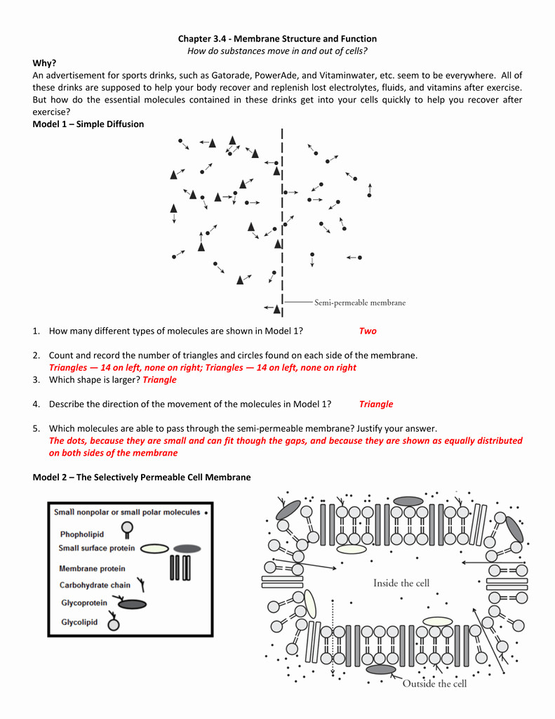 Cell Membrane Images Worksheet Answers Membrane Structure and Function Worksheet