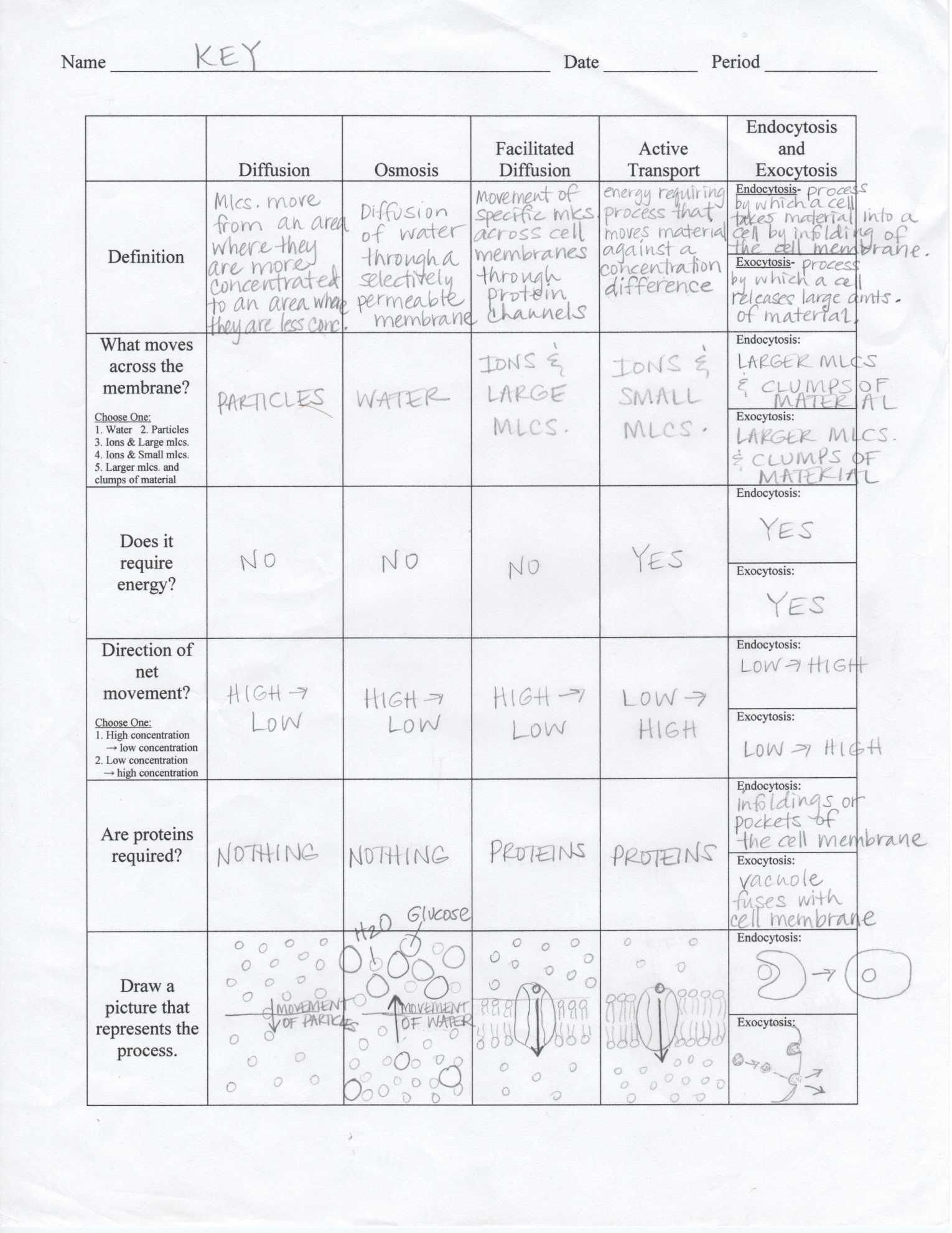 Cell Membrane Images Worksheet Answers Transport Across Cell Membrane Worksheet Nidecmege