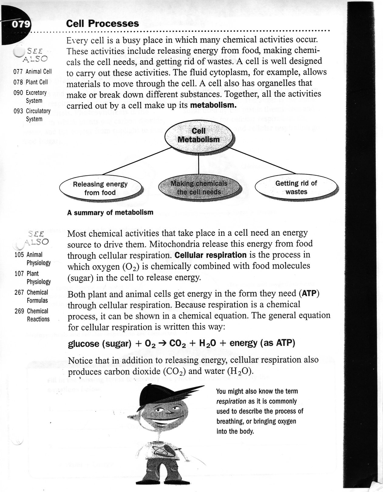 Cell Transport Worksheet Biology Answers Homeostasis and Cell Transport Worksheet Answers