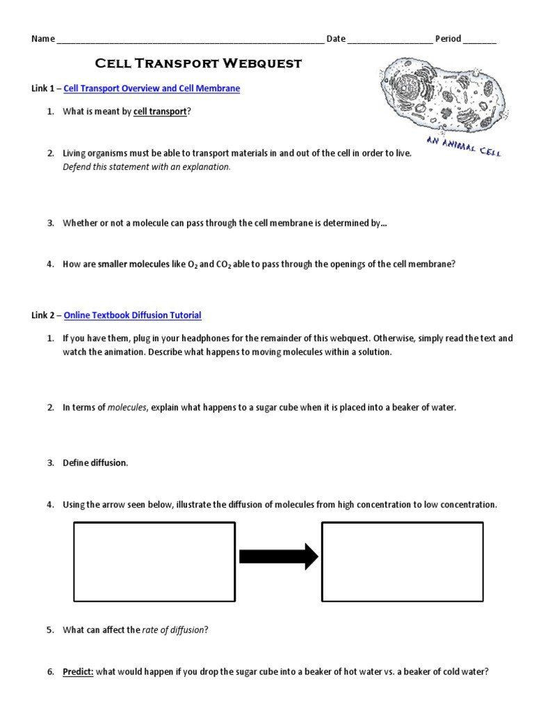 Cell Transport Worksheet Biology Answers Pin On Printable Worksheet Answer Key