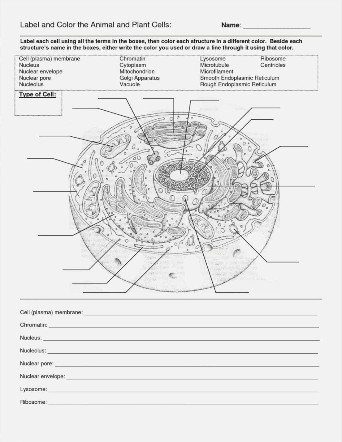 Cells Alive Worksheet Answer Key Cells Alive Cell Cycle Worksheet
