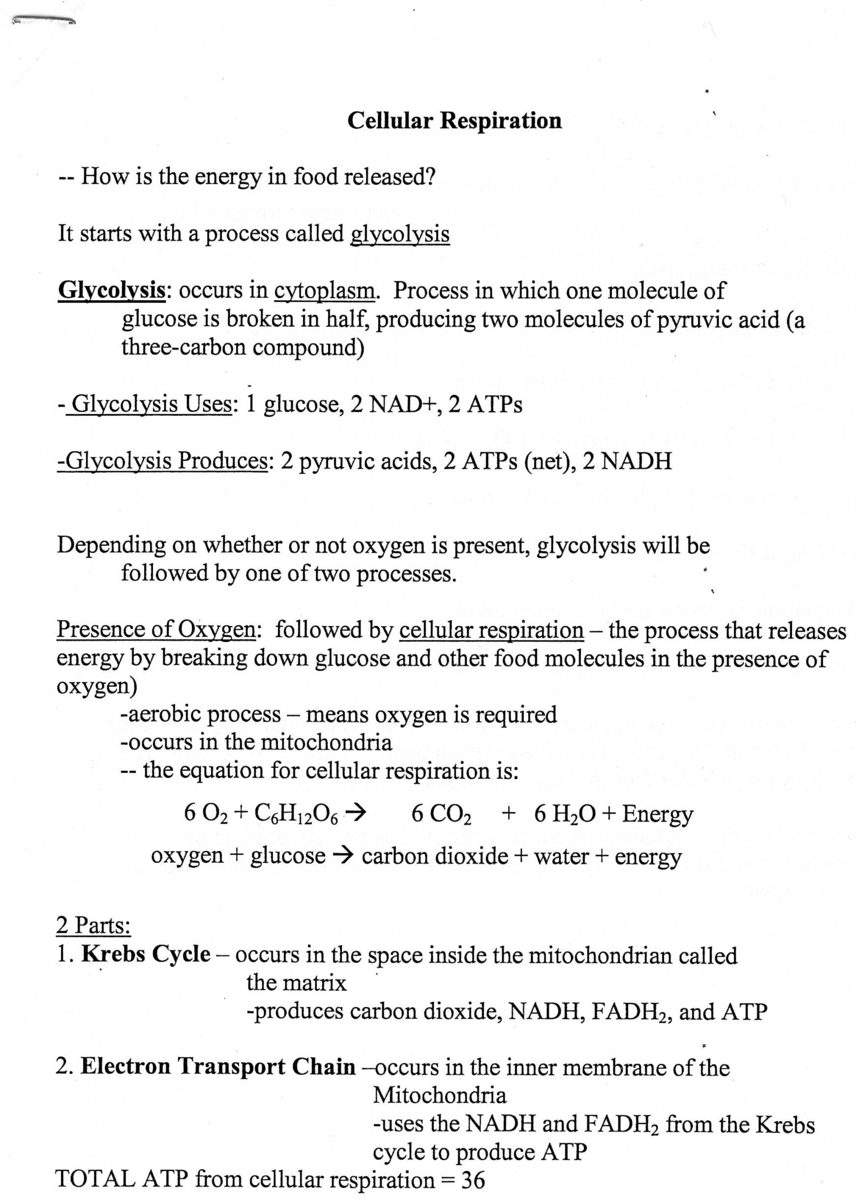 Cellular Transport Worksheet Answer Key Cellular Transport Worksheet