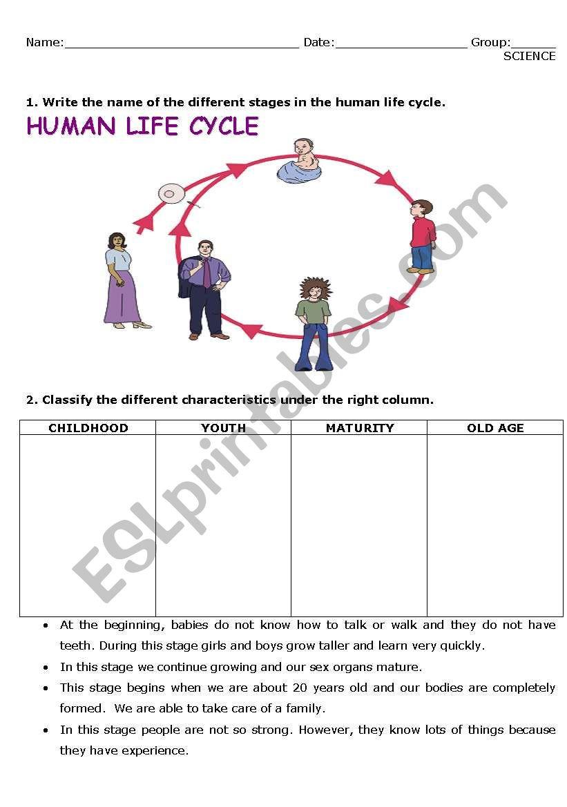Characteristics Of Life Worksheet English Worksheets Human Life Cycle