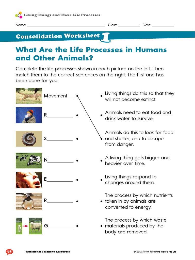 Characteristics Of Life Worksheet Living Things and their Life Processes Worksheet Plants