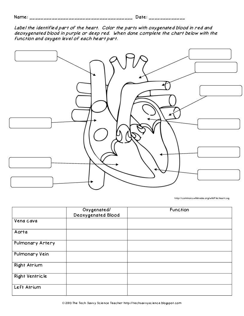 Circulatory System Worksheet Pdf ปักพินโดย Chonni Wn ใน All About Biology