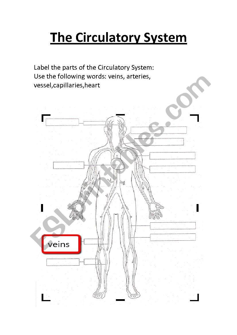 Circulatory System Worksheet Pdf the Circulatory System Worksheet Label Esl Worksheet by
