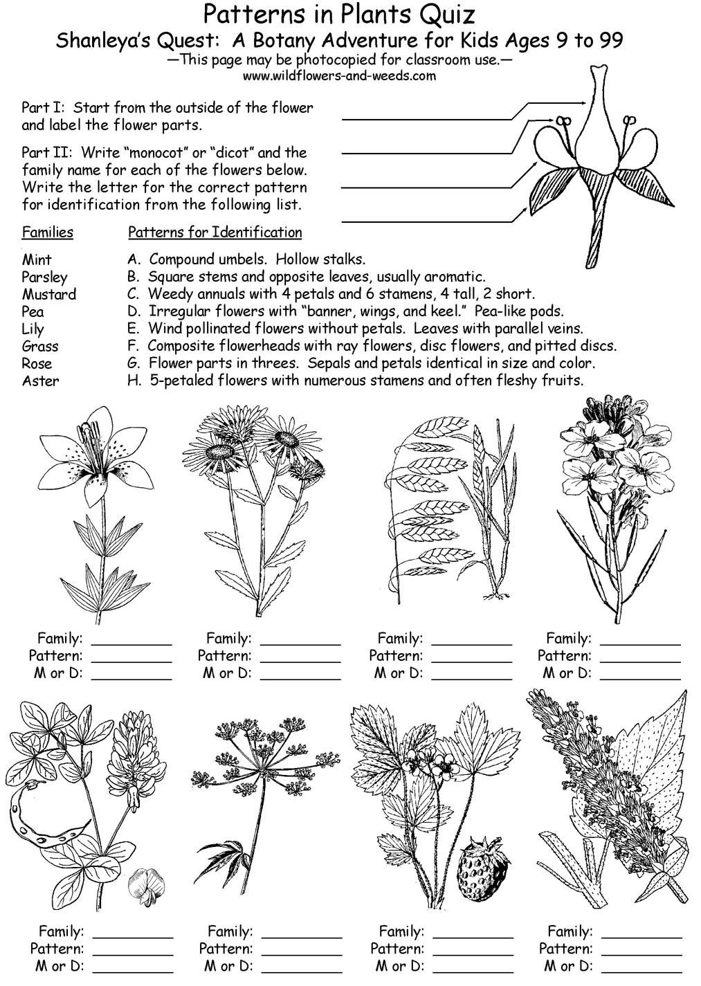Dichotomous Key Worksheet Middle School Outdoor Skills Curriculum Guide Lesson Plans Science