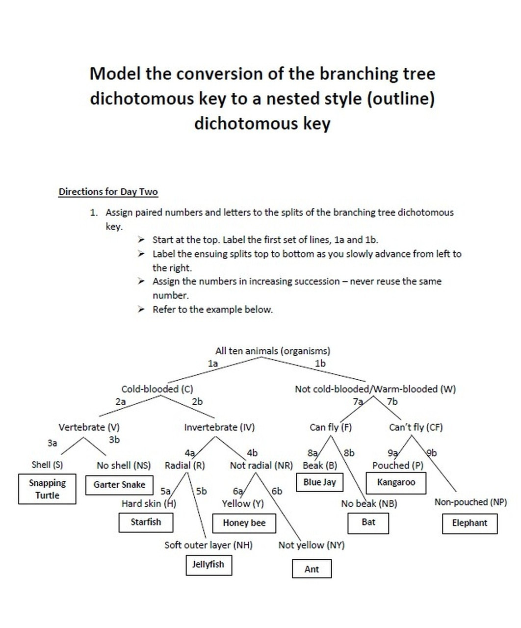 Dichotomous Key Worksheet Middle School Two Day Dichotomous Key Taxonomy Project for Biology