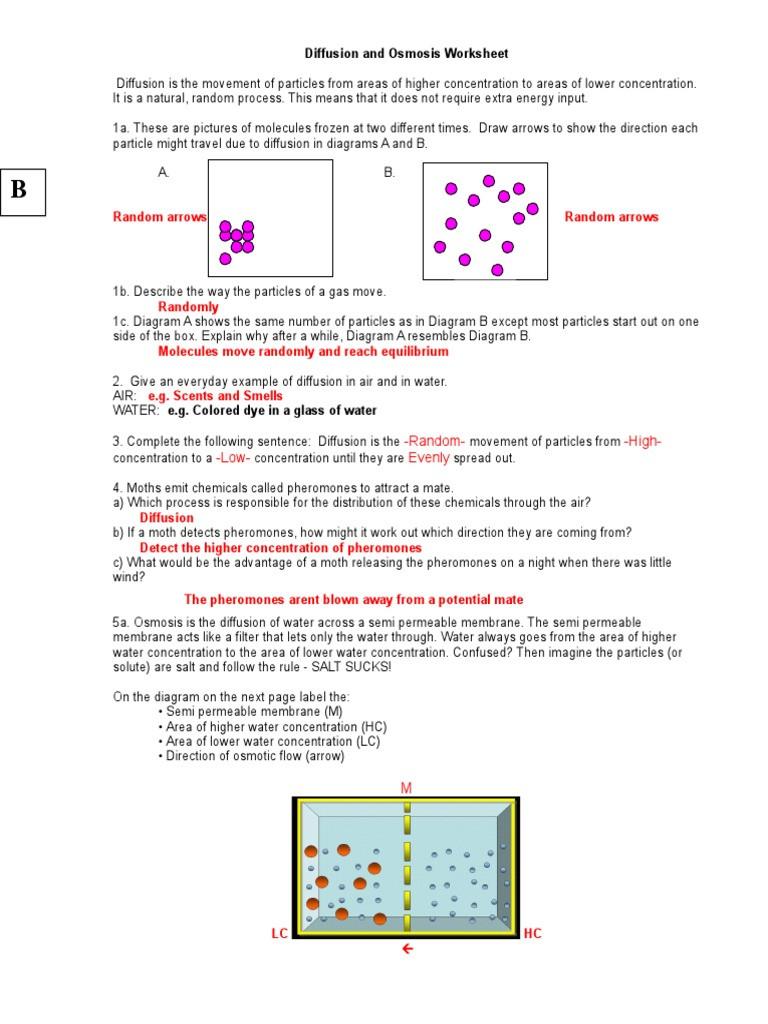 Diffusion and Osmosis Worksheet Diffusion and Osmosis Worksheet Key 08 Osmosis