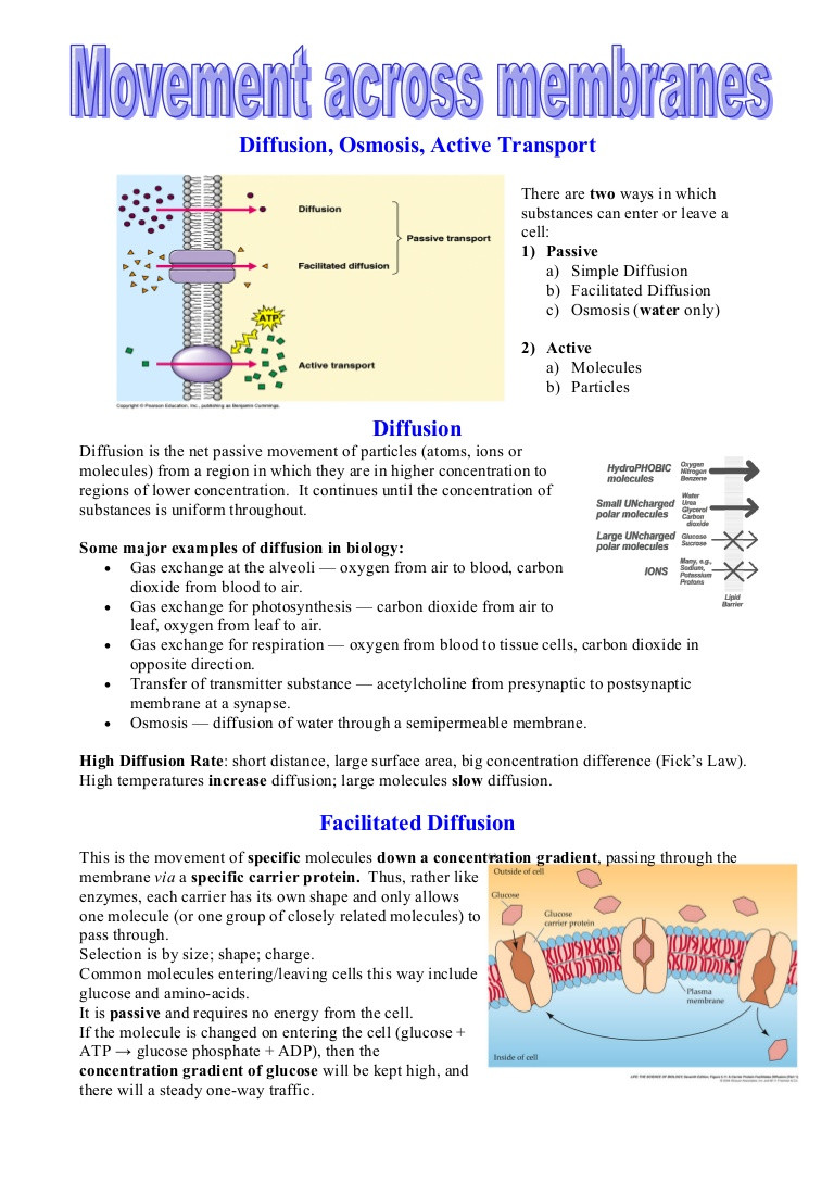 Diffusion and Osmosis Worksheet Diffusionrevision