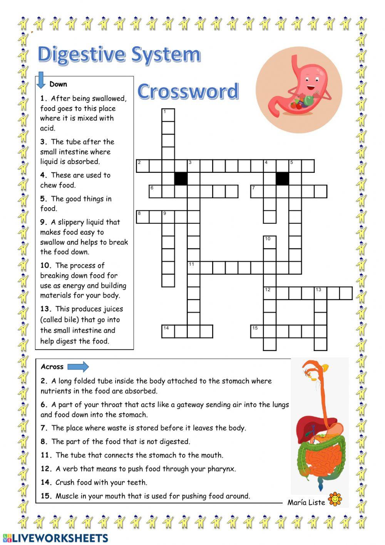 Digestive System Worksheet Answers Digestive System Crossword Interactive Worksheet