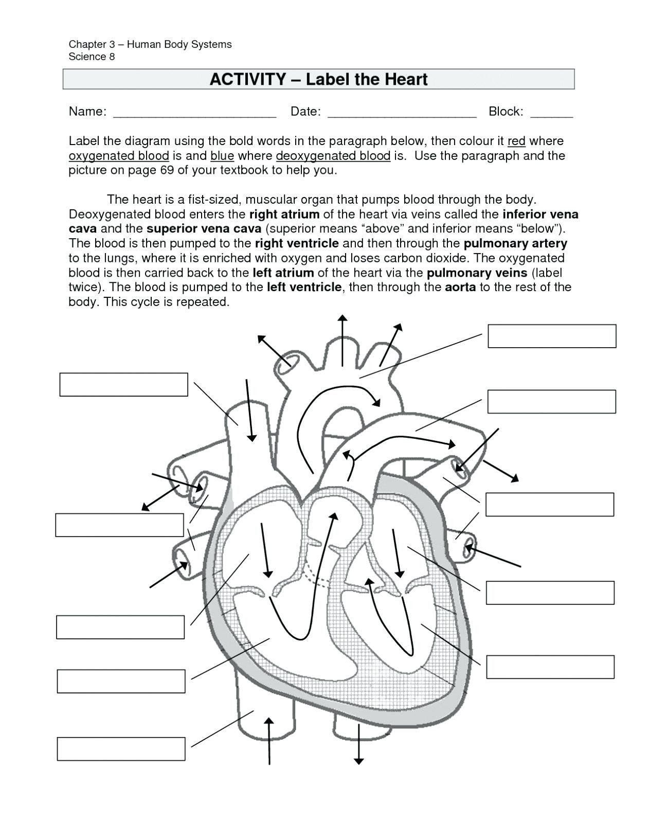 Digestive System Worksheet Answers Pin On Printable Blank Worksheet Template