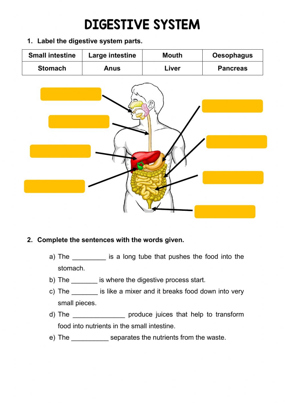 Digestive System Worksheet Answers the Digestive System Interactive Worksheet