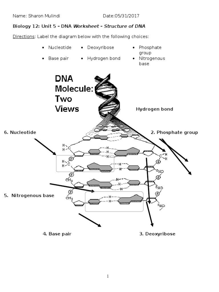 Dna Base Pairing Worksheet Answers Biology 12 Unit 5 Dna Worksheet Dna Strucuture 1