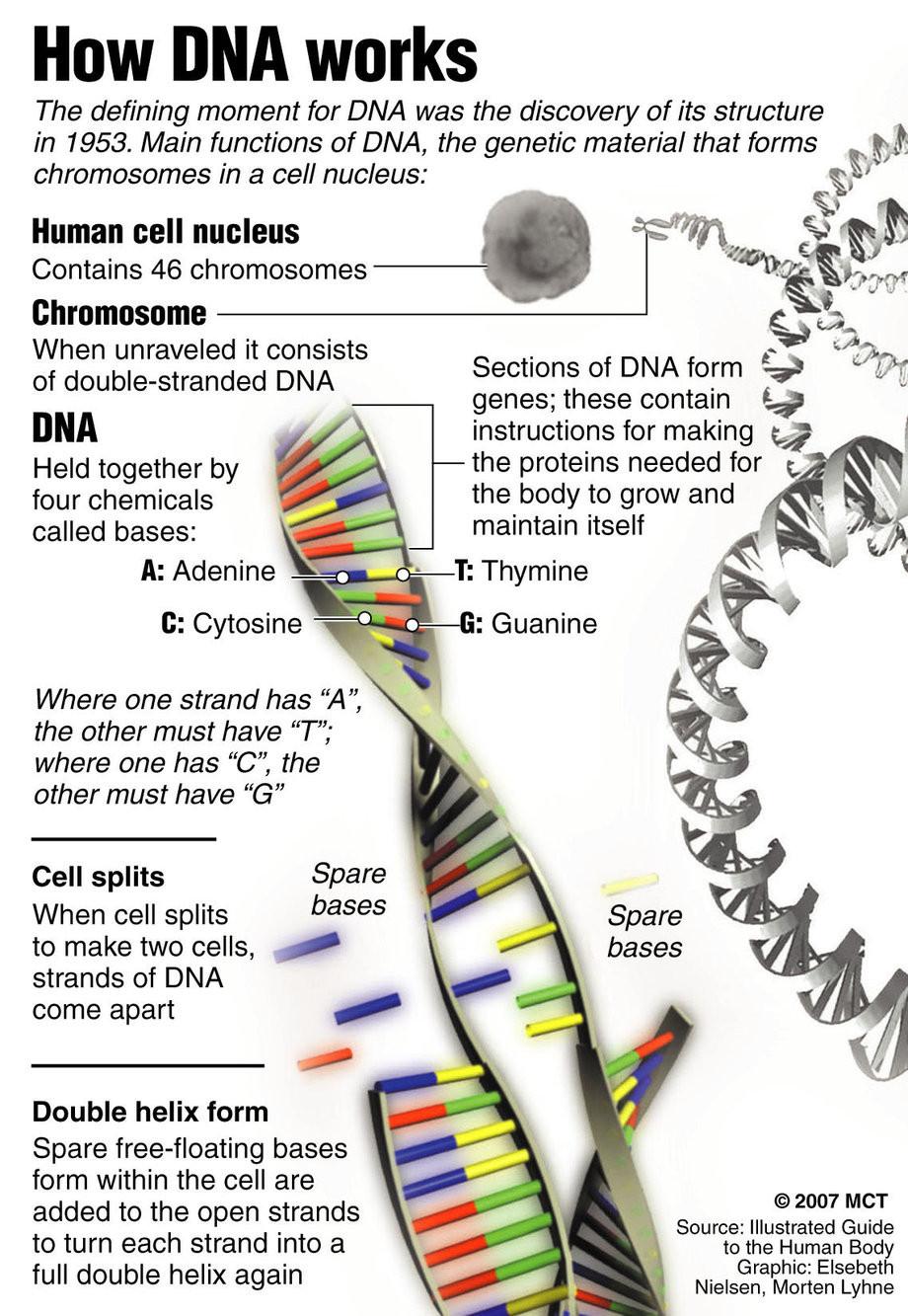 Dna Replication Coloring Worksheet 5 Dna Structure Worksheet Biological Science Picture