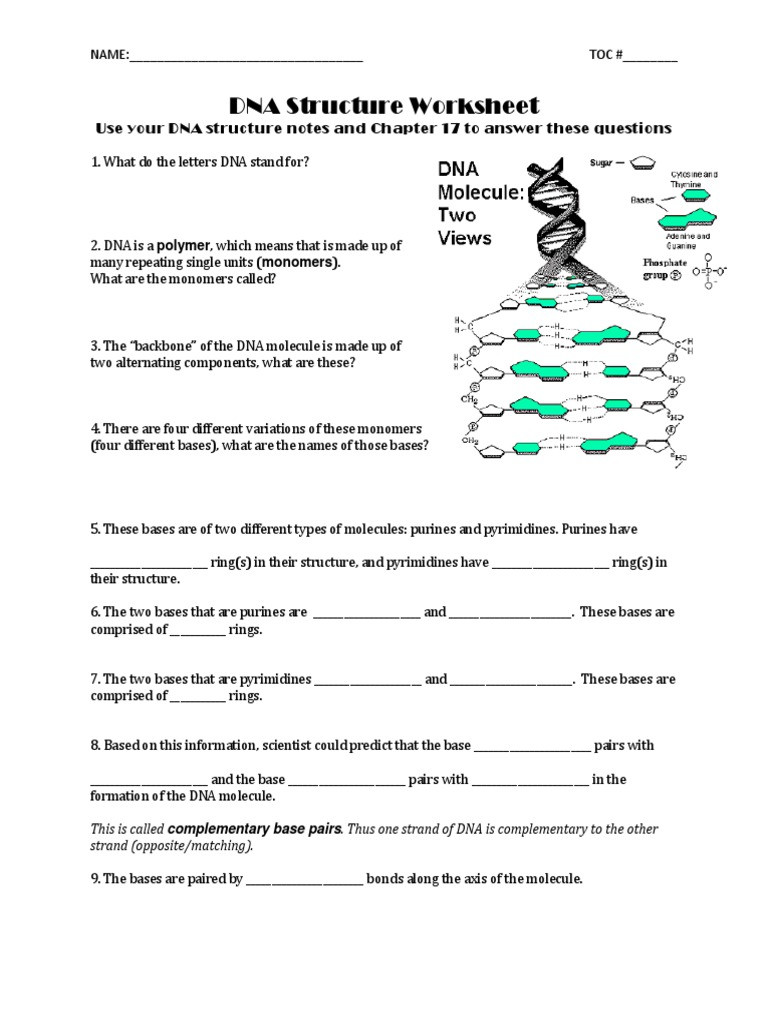 Dna Structure Worksheet Answer Key Dna Structure Gp13