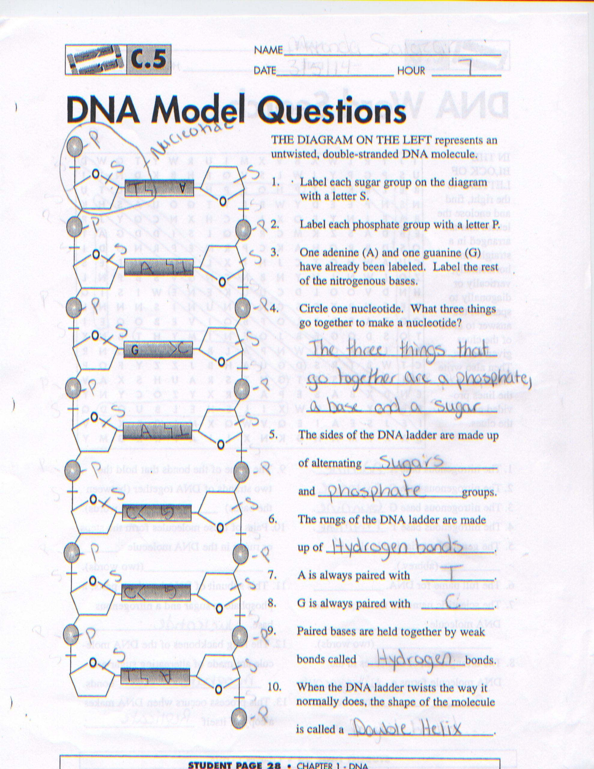 Dna Structure Worksheet Answer Key Dna Structure