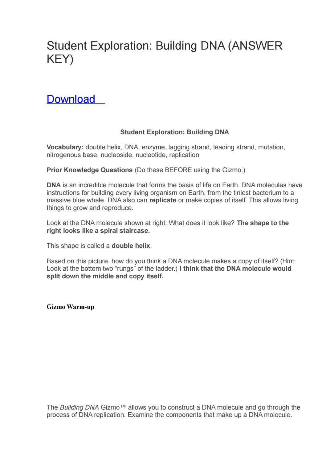 Dna Structure Worksheet Answer Key Student Exploration Building Dna Answer Key by Dedfsf