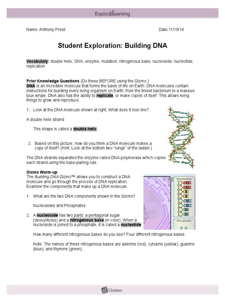 Dna Structure Worksheet Answer Key Student Exploration Building Dna Nucleotides