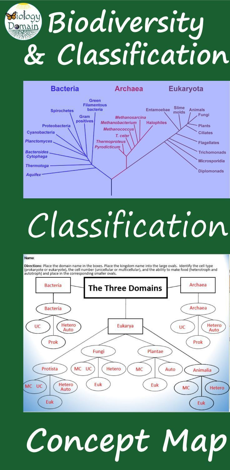 Domains and Kingdoms Worksheet Domain and Kingdom Classification Concept Map and Graphic