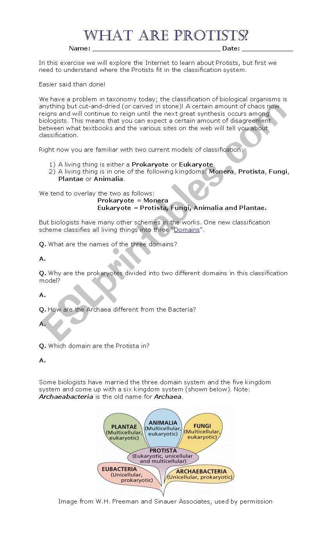 Domains and Kingdoms Worksheet English Worksheets Fungi