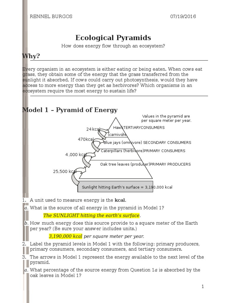 Energy Flow In Ecosystems Worksheet 26 Ecological Pyramids S Rennel Biomass Ecology