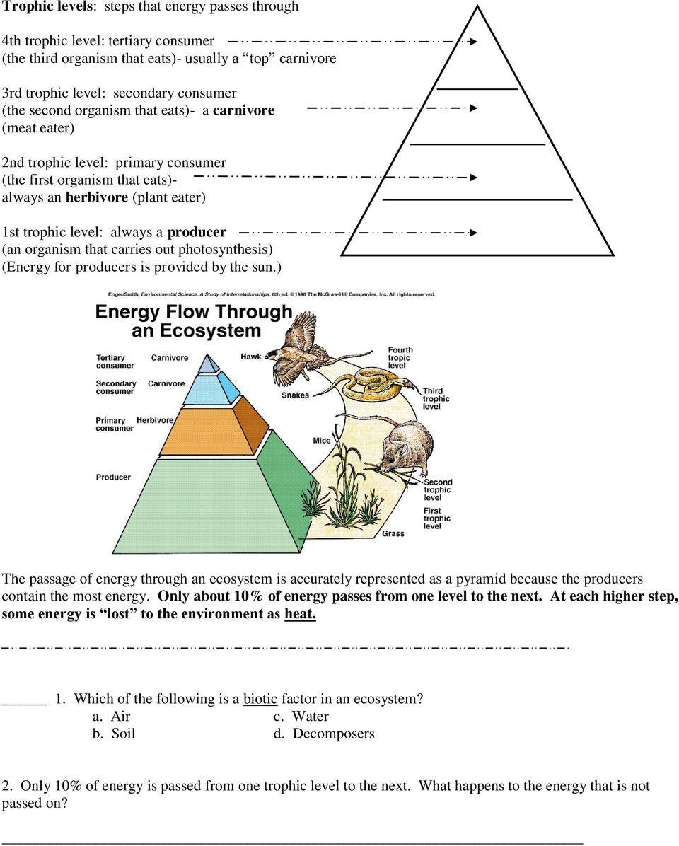 Energy Flow In Ecosystems Worksheet Energy Flow In An Ecosystem Worksheet Worksheet List