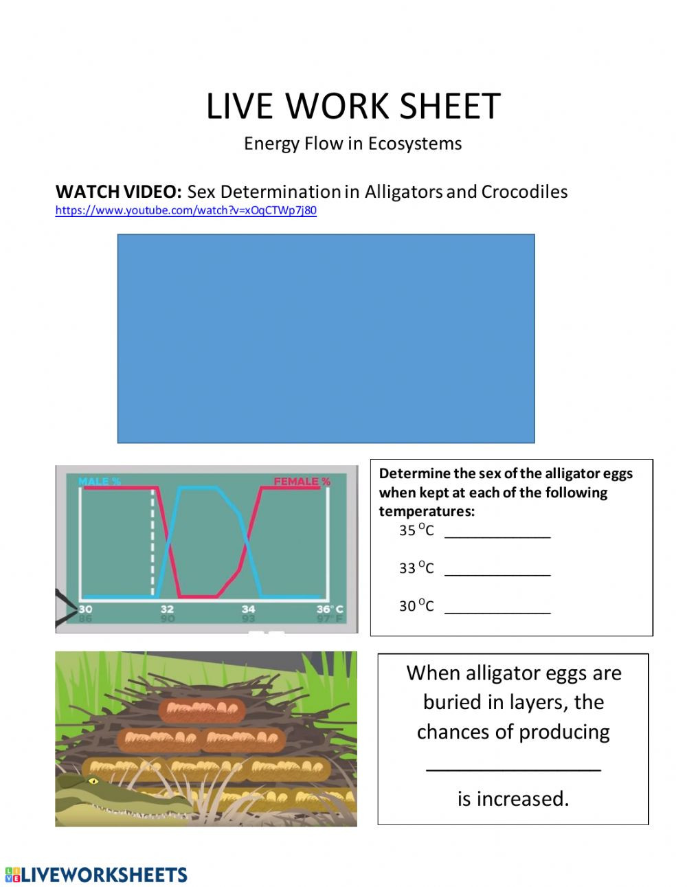 Energy Flow In Ecosystems Worksheet Live Work Sheet Energy Flow In Ecosystems Interactive
