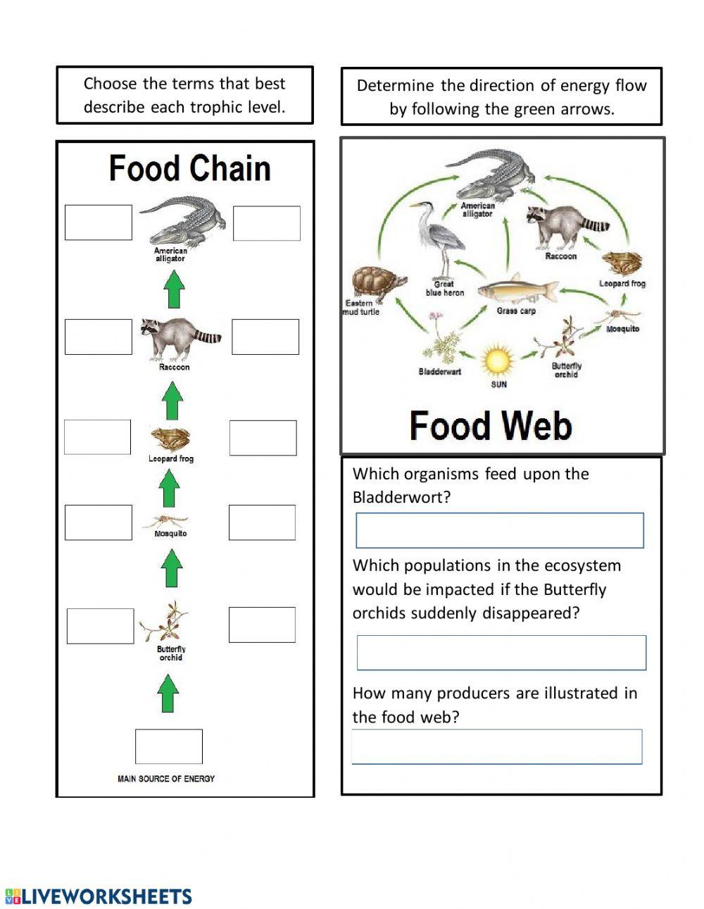 Live Work Sheet Energy Flow in Ecosystems bu xv
