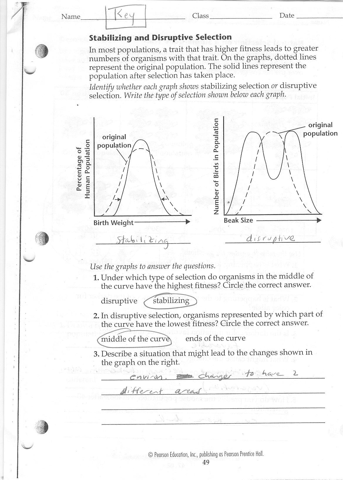 Enzyme Reactions Worksheet Answer Key Straubel Biology 2010 2011
