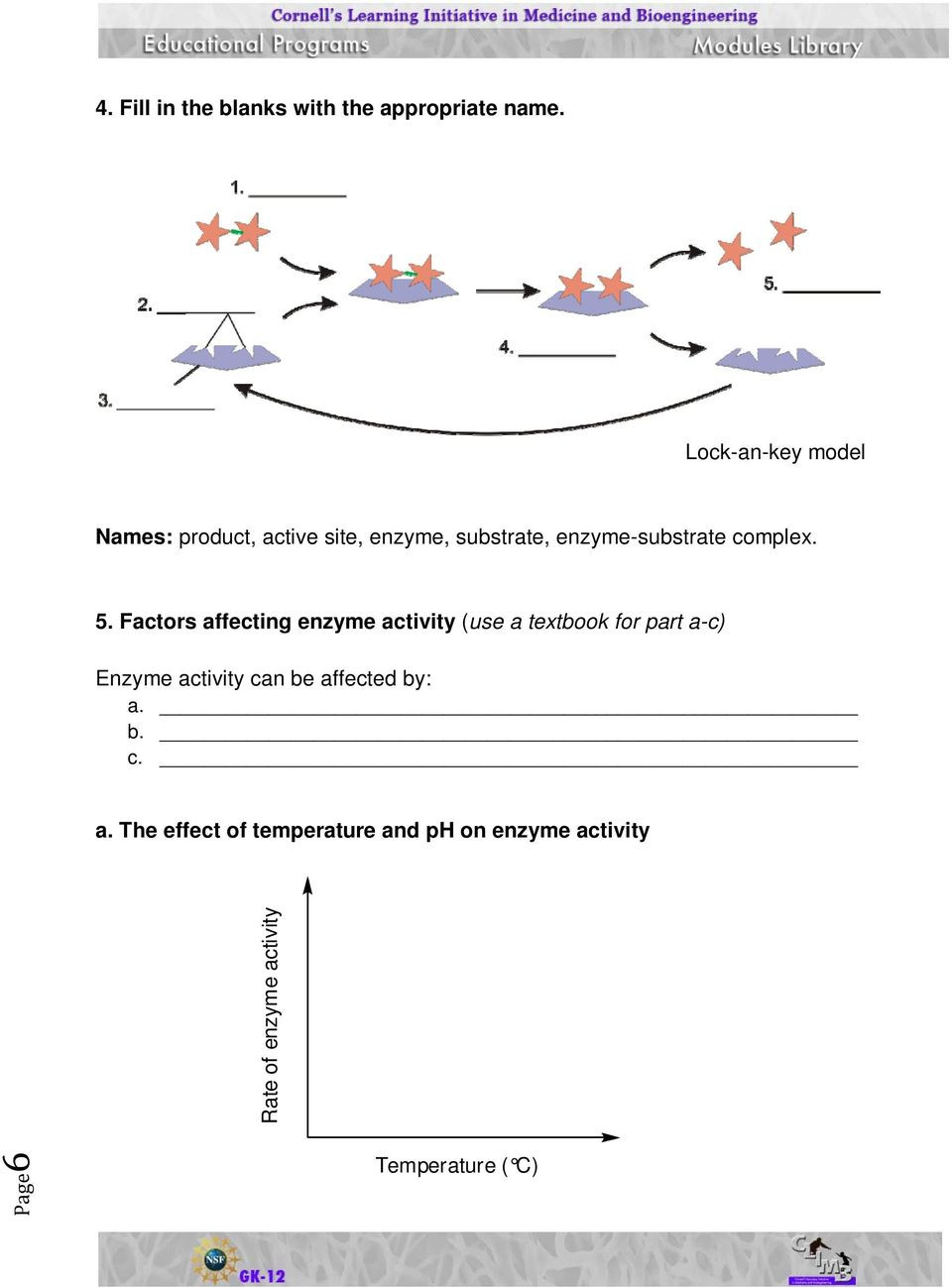 Enzyme Review Worksheet Answers Activity Sheets Enzymes and their Functions Pdf Free Download