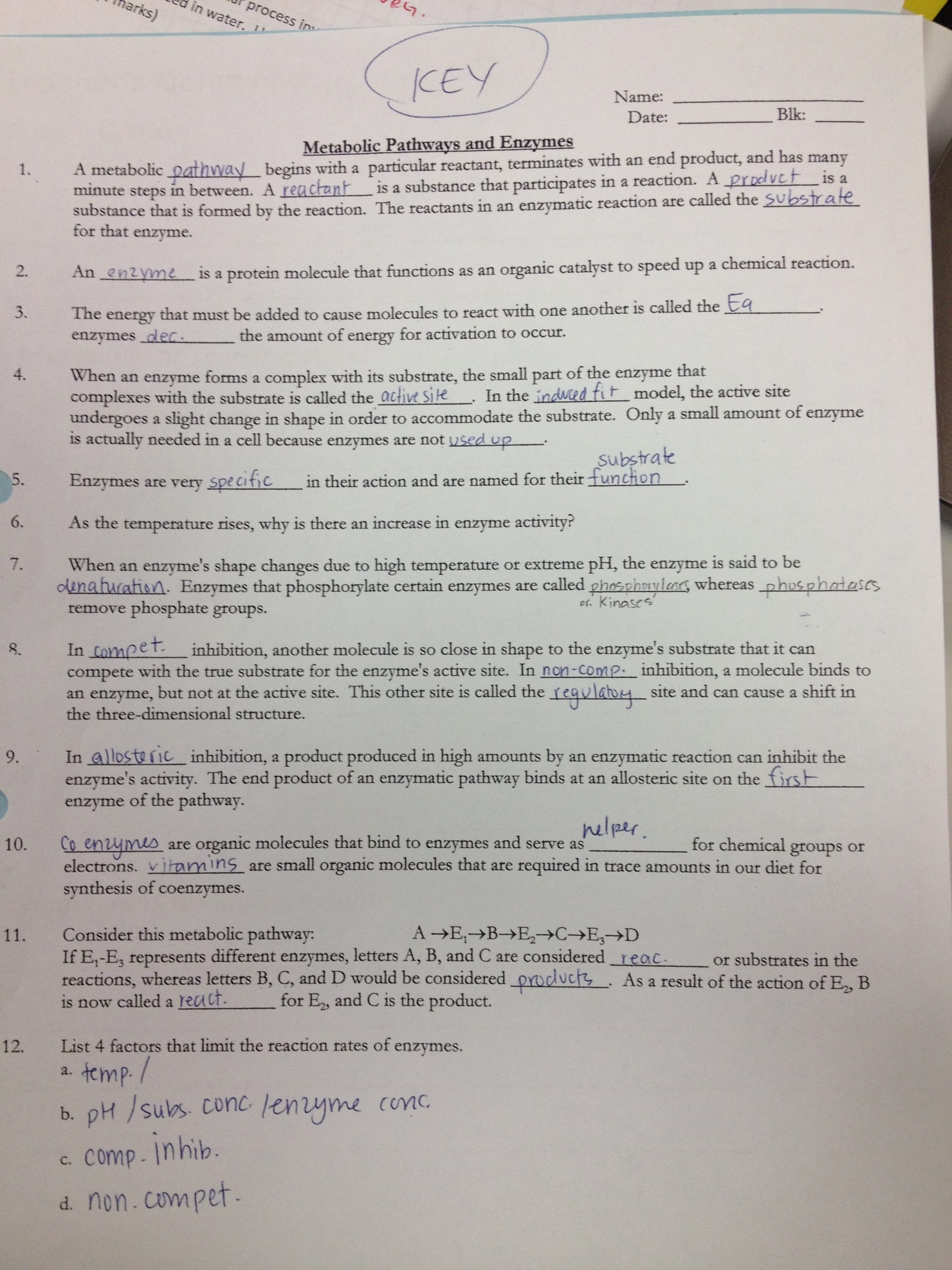 Enzyme Review Worksheet Answers Enzyme Worksheet Answers