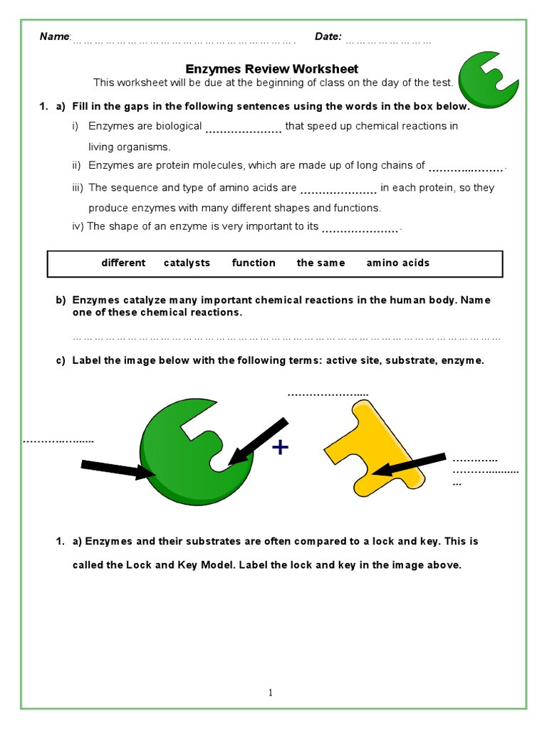 Enzyme Review Worksheet Answers Enzymes Review Packet 2 Digestion