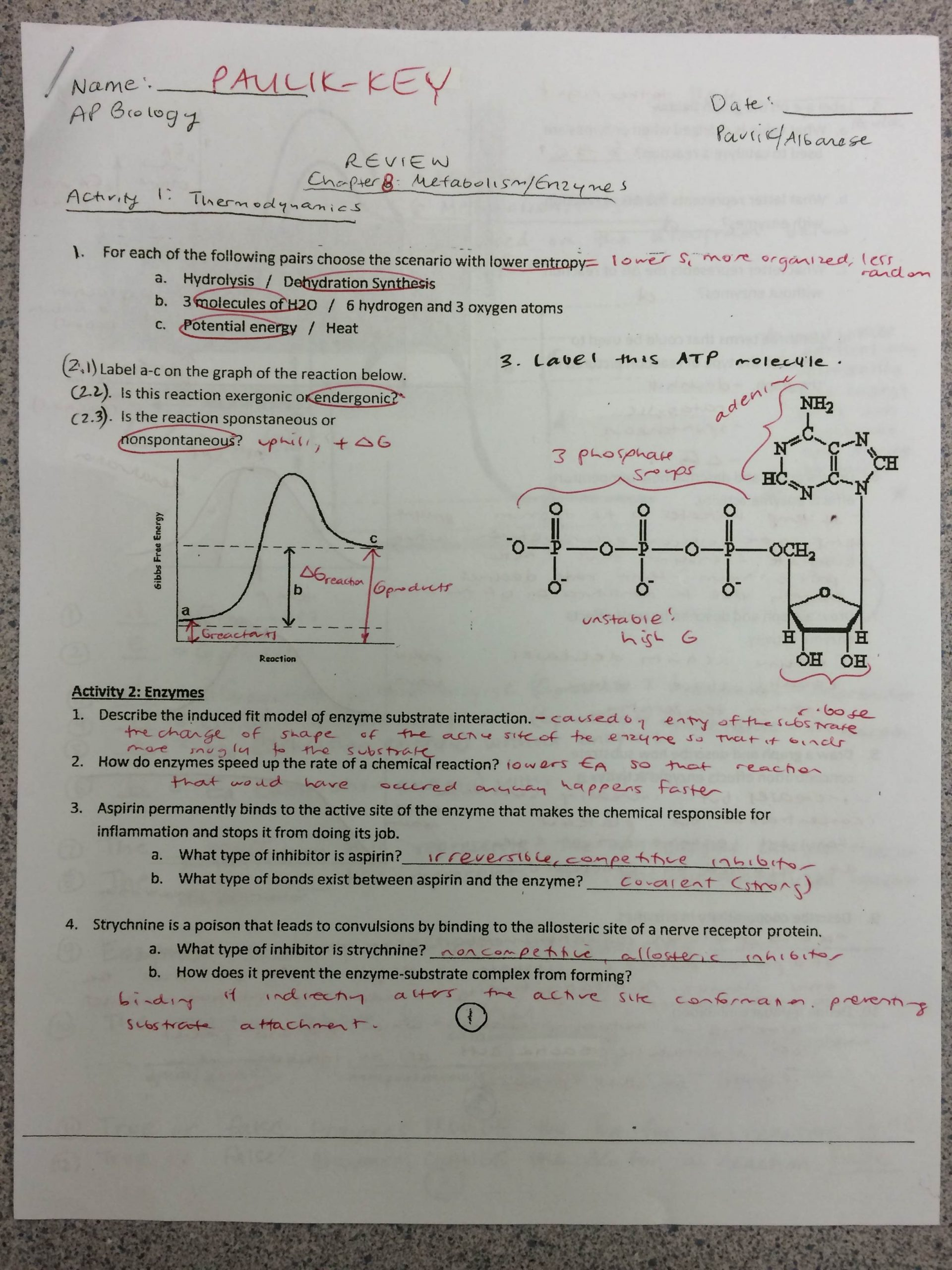 Enzyme Review Worksheet Answers Key to Review Metabolism Enzymes Packet Mrs Paulik S